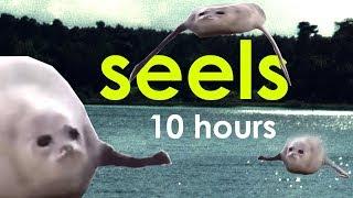 seels 10 hours