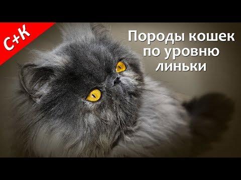 Вопрос: Какие кошки меньше всего линяют, если не считать сфинксов?