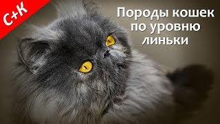 Породы кошек, которые не линяют, мало линяют, сильно линяют.