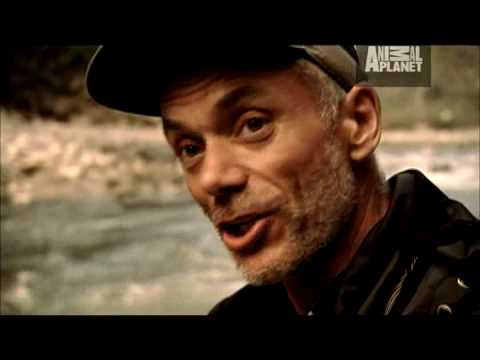 River Monsters - Catching Goonch Catfish from YouTube · Duration:  2 minutes  · 366,000+ views · uploaded on 4/24/2009 · uploaded by Animal Planet
