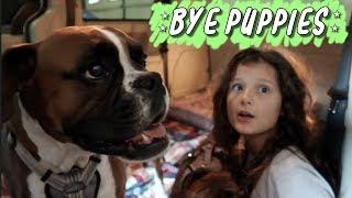 Bye Puppies WK 396.7 Bratayley