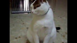 Кот разговаривает с хозяйкой 3)
