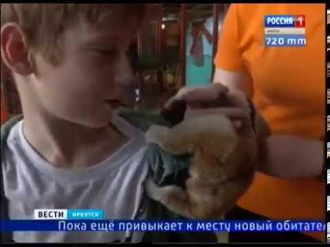 Первый в Иркутске толстый лори появился в «Сибирском зоопарке»