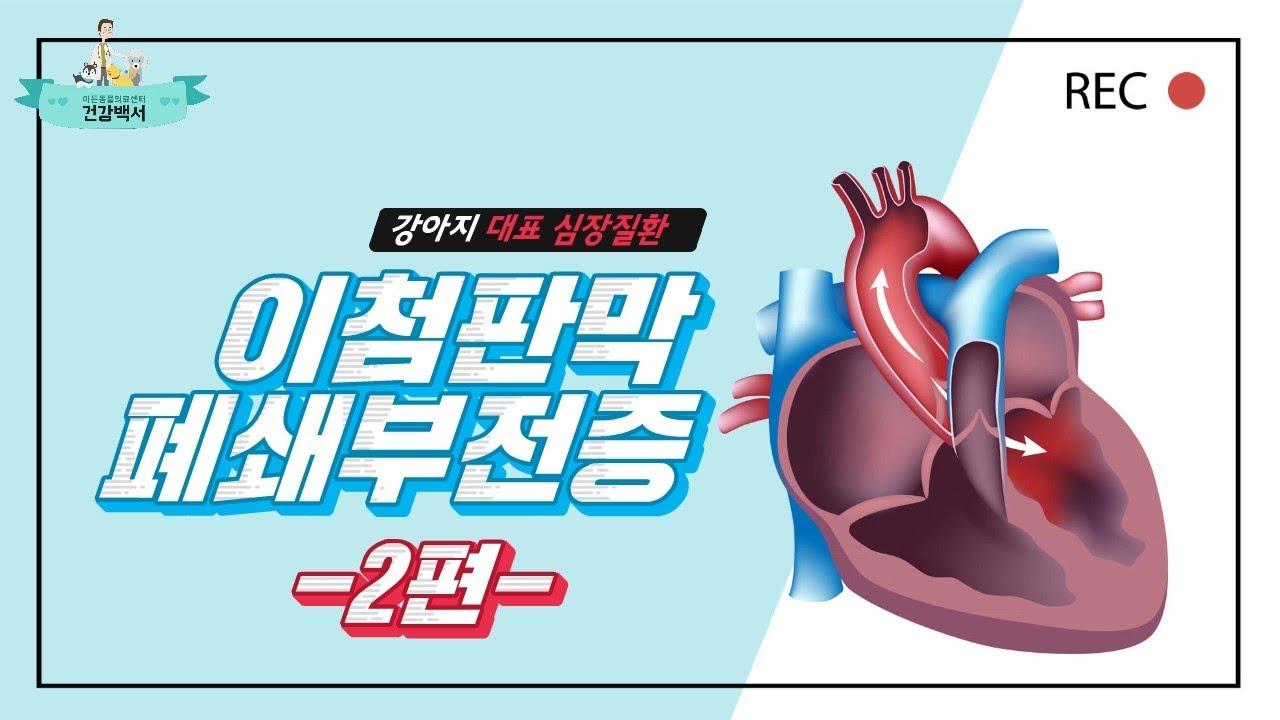 강아지 심장병 대표 질환, 이첨판막폐쇄부전증의 모든 것(2편)_이든TV