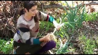 Plantas silvestres comestibles. Parte 1