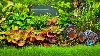 Выращивание и продажа аквариумных растений как бизнес