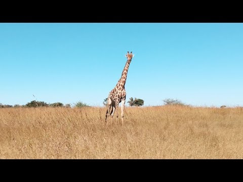 12 Days Through Botswana - Road Trip 2018