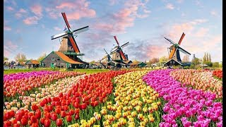 The World's Biggest Flower Garden In Amsterdam - Keukenhof Gardens