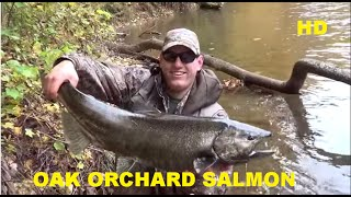 OAK ORCHARD SALMON RUN 2014