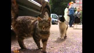 В Адлере отстреливают бездомных кошек