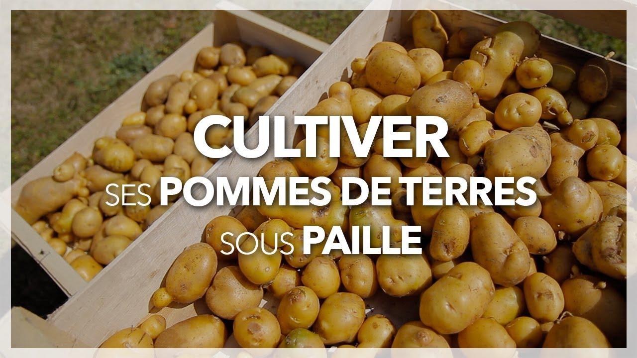 Comment planter des pommes de terre quand et comment planter les pommes de terre with comment - Quand ramasser les pommes de terre ...