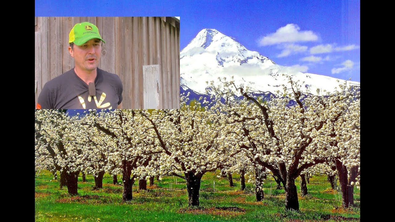 tiny backyard apple orchard youtube