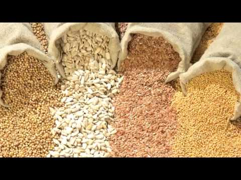 Seeds of Death: Unveiling The Lies of GMO's - Full Movie