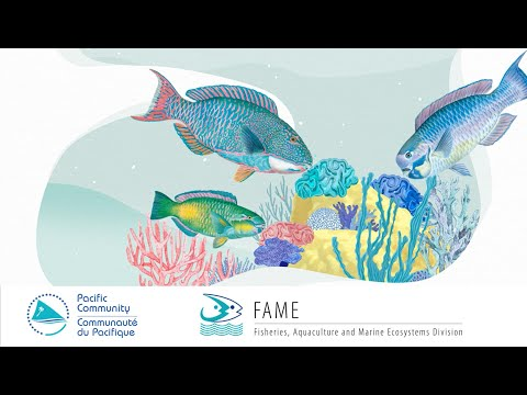 1- The Fisher's Tales (Bislama): Do You Know That Parrotfish Act Like Architect Of The Reef?