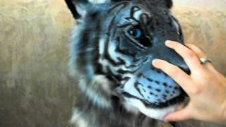 Maltese Tiger !sold!
