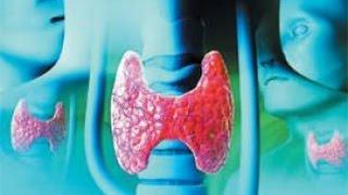 Батарейка нашего организма - щитовидная железа
