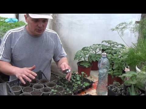 Как солить, квасить, мариновать капусту. КАПУСТА - соленая