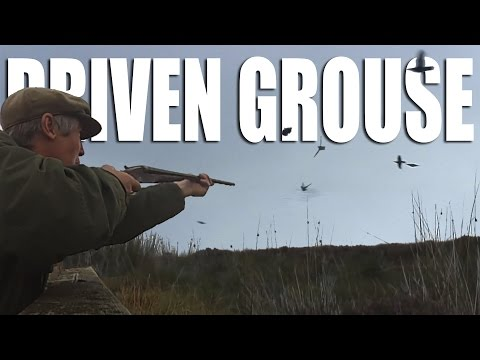 Driven Grouse Shoot in Cumbria