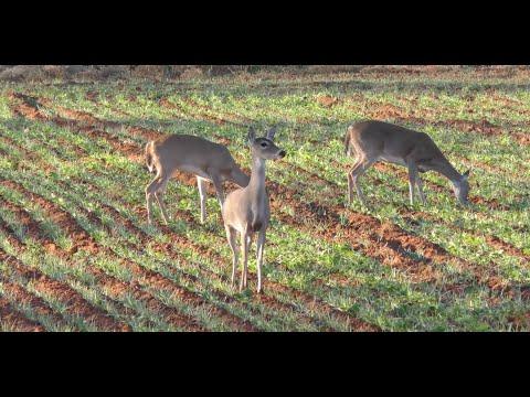 Awesome Rifle Shot on Big 8-Point Buck - Deer & Deer Hunting TV, Full Episode