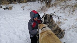 Как кормить собак-2/Bir köpek nasıl beslenir/How to feed a dog