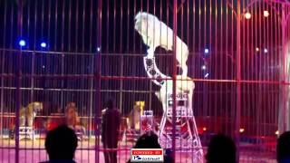 Cirque de Monte Carlo 2013 Circus Lions Show diziro power