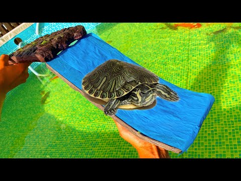 TURTLE WATER Slide Safe For Fish!