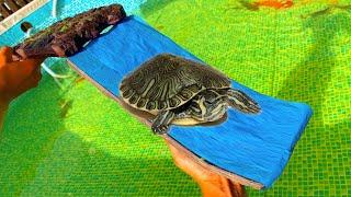 turtle-water-slide-safe-for-fish