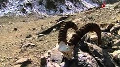 Faszination Wüste   Die Gobi eine Wüste in Bewegung Doku deutsch (Full Doku)