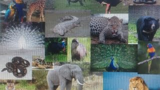 MYSORE ZOO - FULL VIDEO OF ANIMALS AND BIRDS, 2015