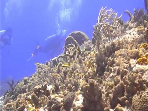 Scuba Diving in Cozumel, Mexico pt 1