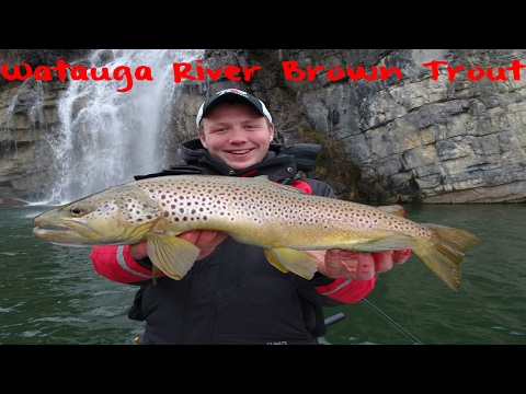 Brown Trout Fishing On Tenneesse's Watauga River