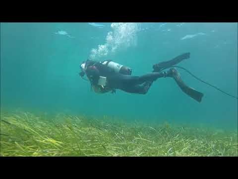 Seagrass Meadow monitoring