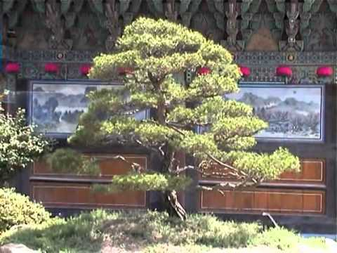 Země před ostnatým drátem - Jižní Korea 2006 (autorský film)