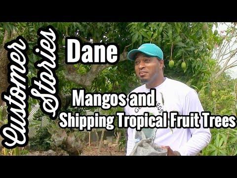 Customer Stories- Dane (Mangos and Shipping Plants)