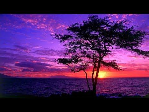 Reiki Zen Relaxation Music: Sunset Meditation | Purple & Black | Delta 1 hz in C | ♒Brainwave Sync♒
