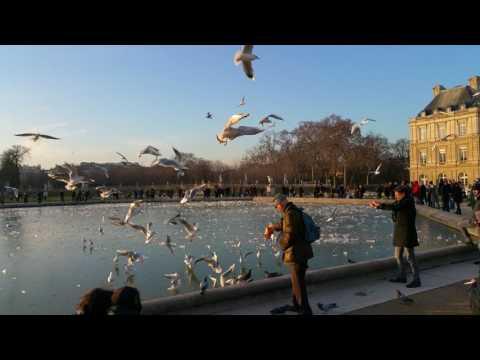 Birds at Luxembourg Palace , Paris