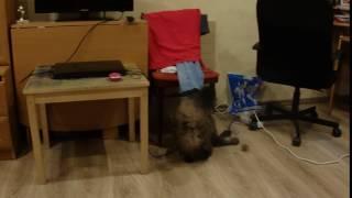 Кошка - волейболистка