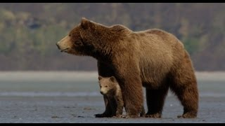 Disneynature's Bears - Official Trailer