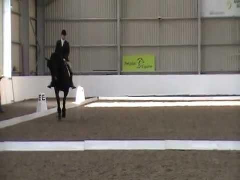 Marchje Fan Fjildsicht & Andrew Chadwick Friesian Horse Association Championship 2011 Prelim 12