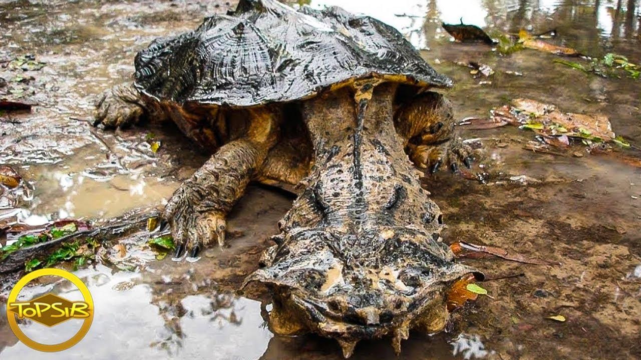 10 สัตว์เลื้อยคลานที่อันตรายที่สุดในโลก (ระวัง)