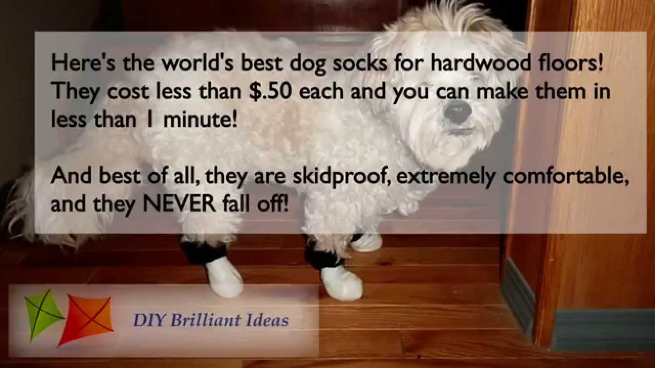 Dog Socks For Hardwood Floors Get Booties Or Shoes You