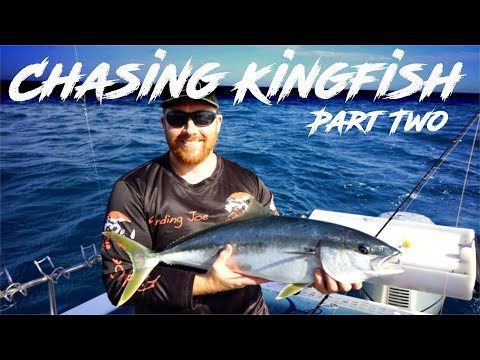 Catching Yellowtail Kingfish, Snapper And Gummy Sharks,  Bass Straight Victoria