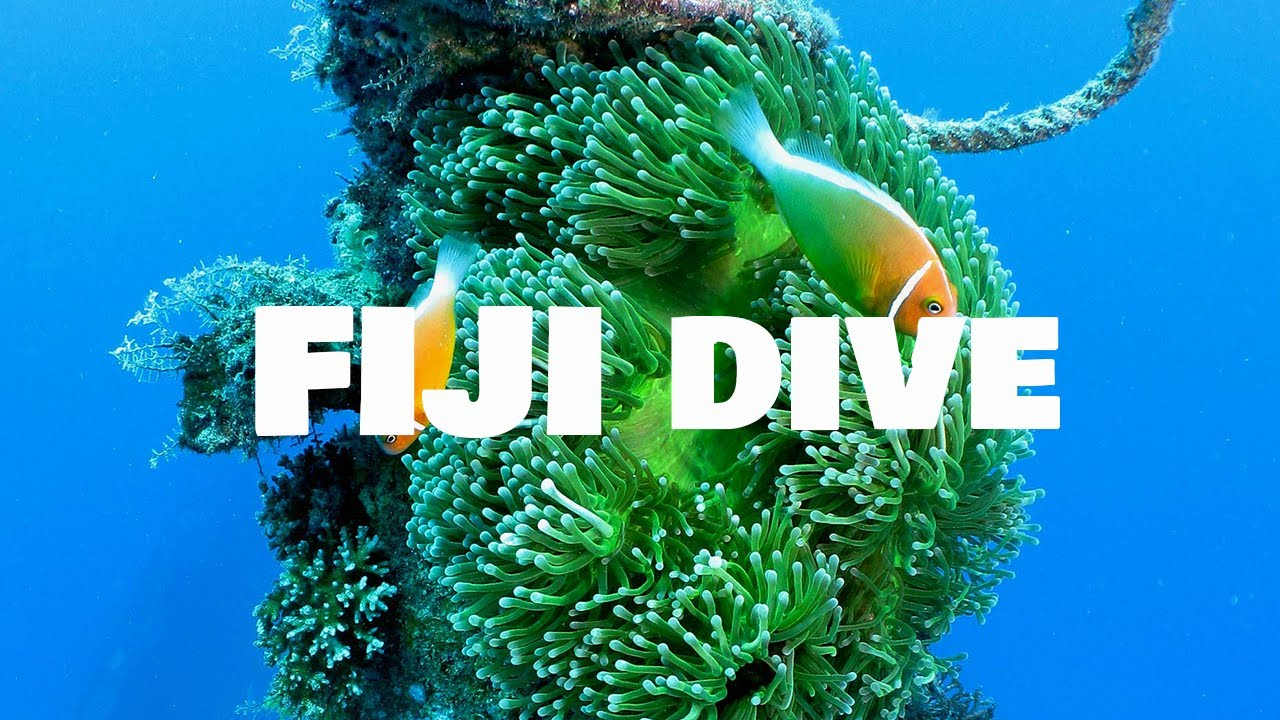 Diving in Fiji │ Paradise Cove Resort