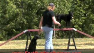 Obedience Training A Pomeranian