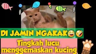 #KucingLucu #KucingNakal #KucingImut TINGKAH LAKU KUCING YANG MENGGEMASKAN, LUCU, NAKAL & MENGHIBUR