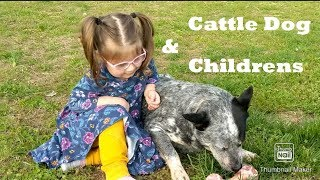 Australian cattle dogs with children