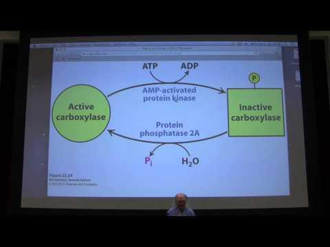 37. Kevin Ahern's Biochemistry - Fat and Fatty Acid Metabolism II