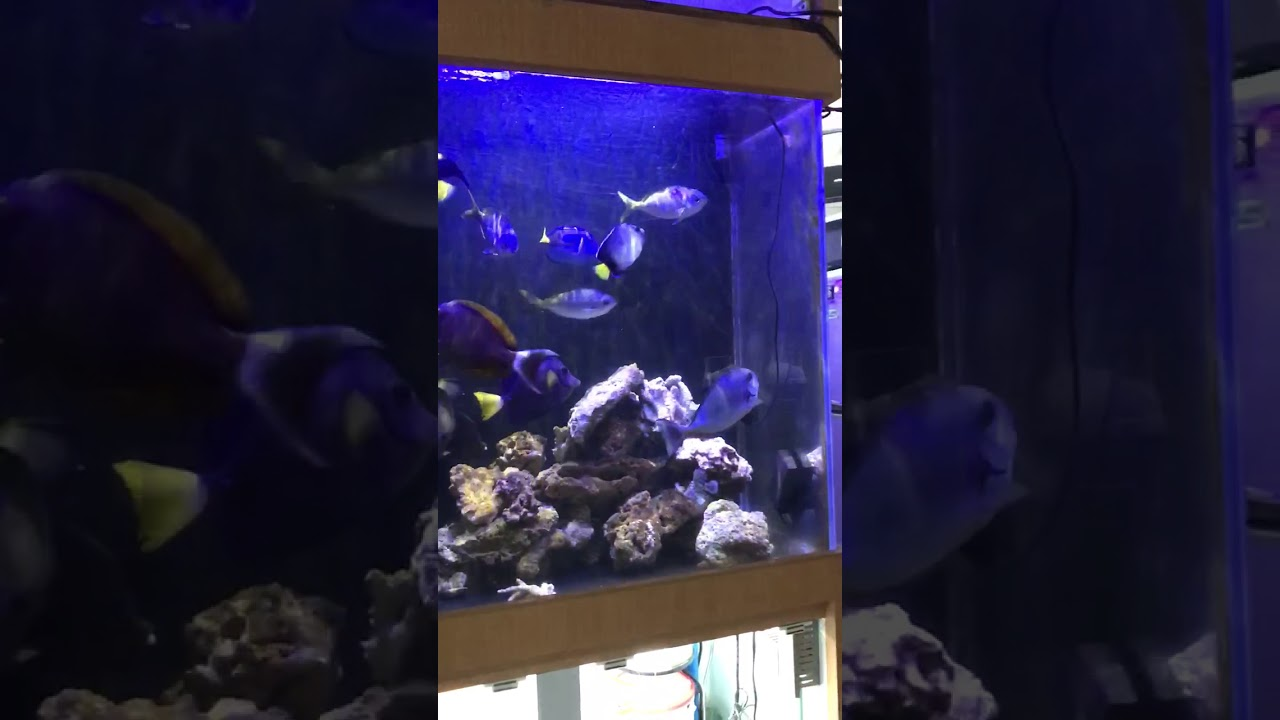 魚缸燈分享2 - YouTube