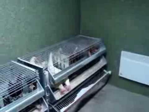 клетки для кур-несушек
