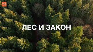 Лес и закон  С какими сложностями сталкиваются люди, которые решили жить и работать на своей земле